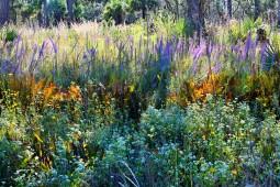 Tosohatchee Wildlife Management Area, Florida