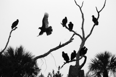 Orlando Wetlands Park, Florida