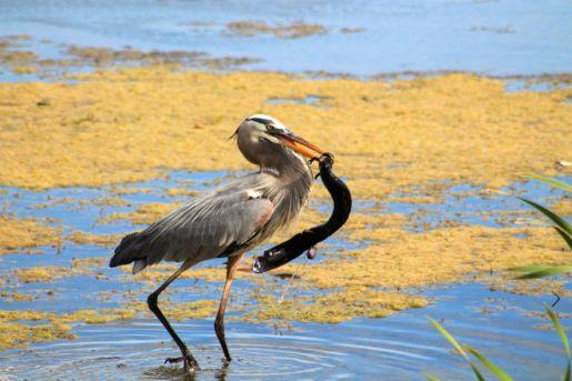 Orlando Wetlands Park, Florida (printed by Orlando Weekly)