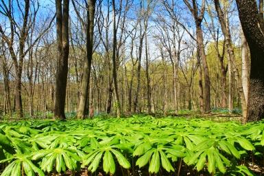 Messenger Woods, Illinois