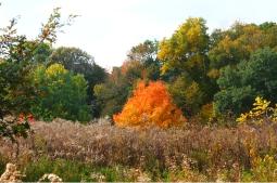 Ryerson Woods, Illinois